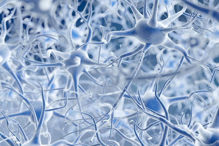 neurons sm